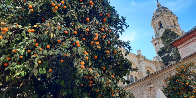 Spain: don't eat the Oranges!