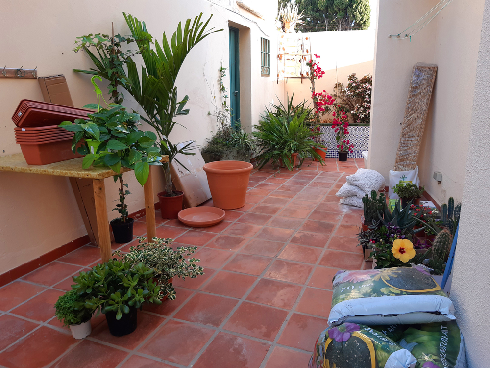 Where to buy Plants in Nerja (and Torrox)
